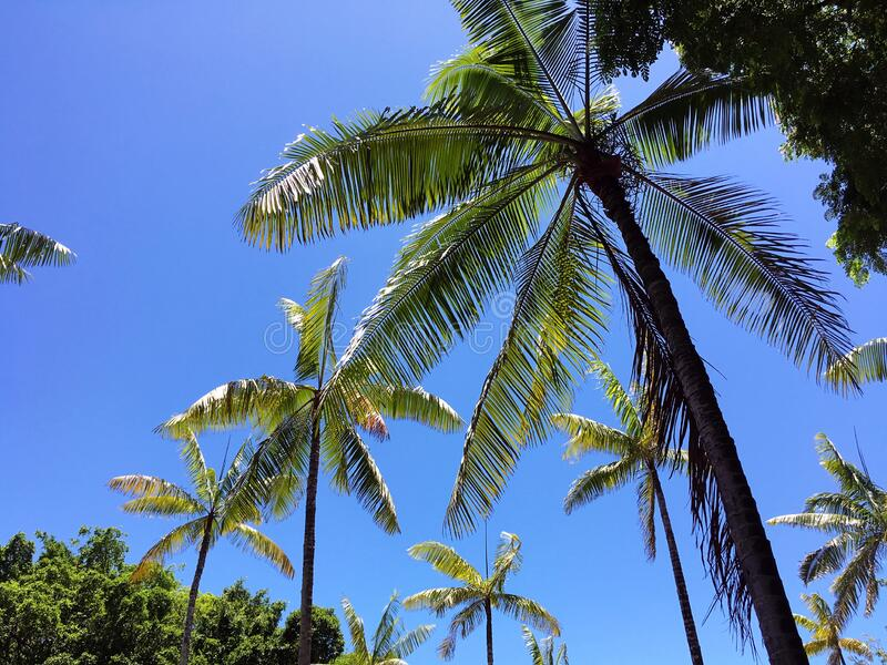 Coconut trees and blue sky royalty free stock photos