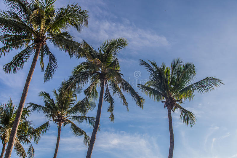 summer outdoor backgrounds. Download Coconut Trees With Blue Sky | Summer Outdoor Background Stock Photo - Image Of View Backgrounds E