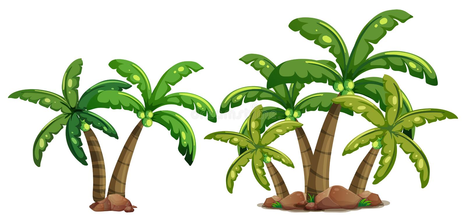Coconut trees. Illustration of coconut trees on a white background vector illustration