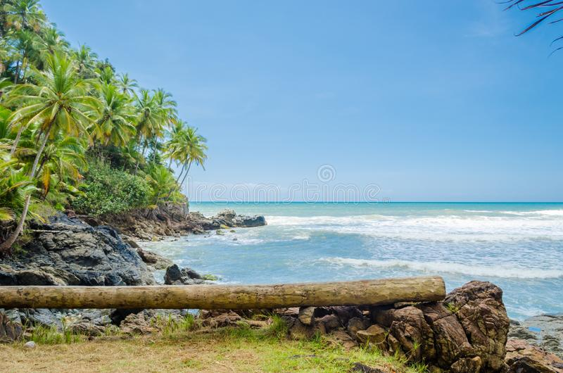 Coconut trees, intense vegetation and large rocks in contact with the sea. Fallen wooden trunk used as bench in the foreground. stock photography