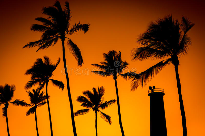 Coconut trees and lighthouse stock photo
