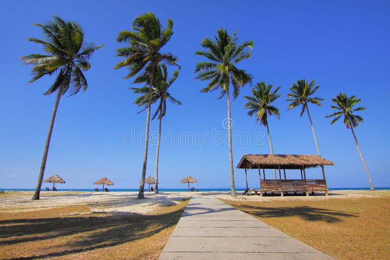 Coconut Trees Lined Near Sea at Daytime stock photo