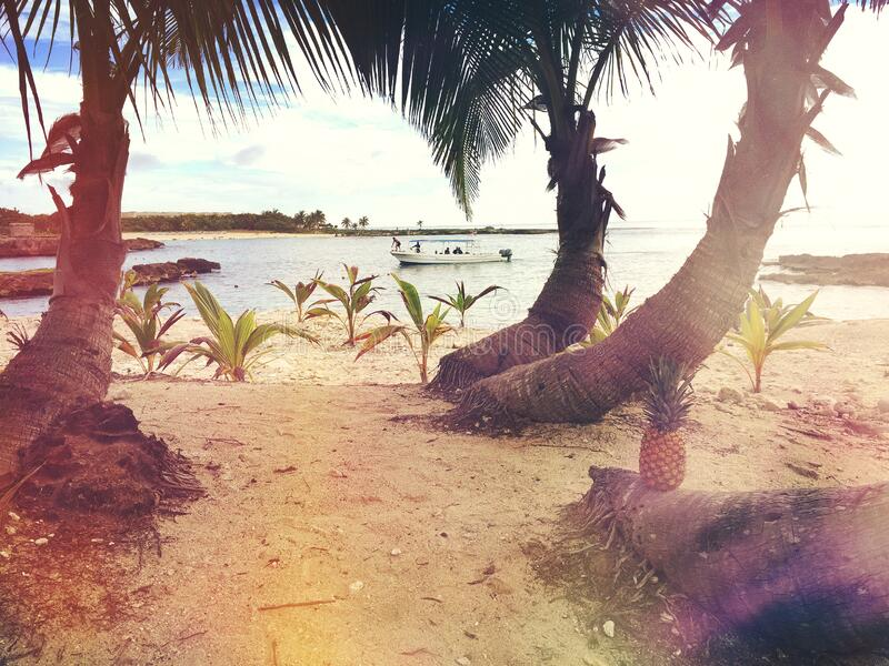 3 Coconut Trees Near the Beach Shore Line during Day Time royalty free stock images