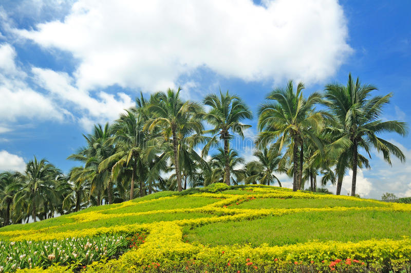 Coconut trees in the park.