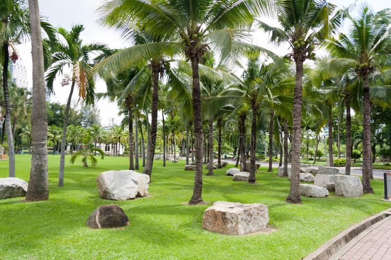 Coconut trees and rocks n Lumphini park, Bangkok, Thailand.  stock image