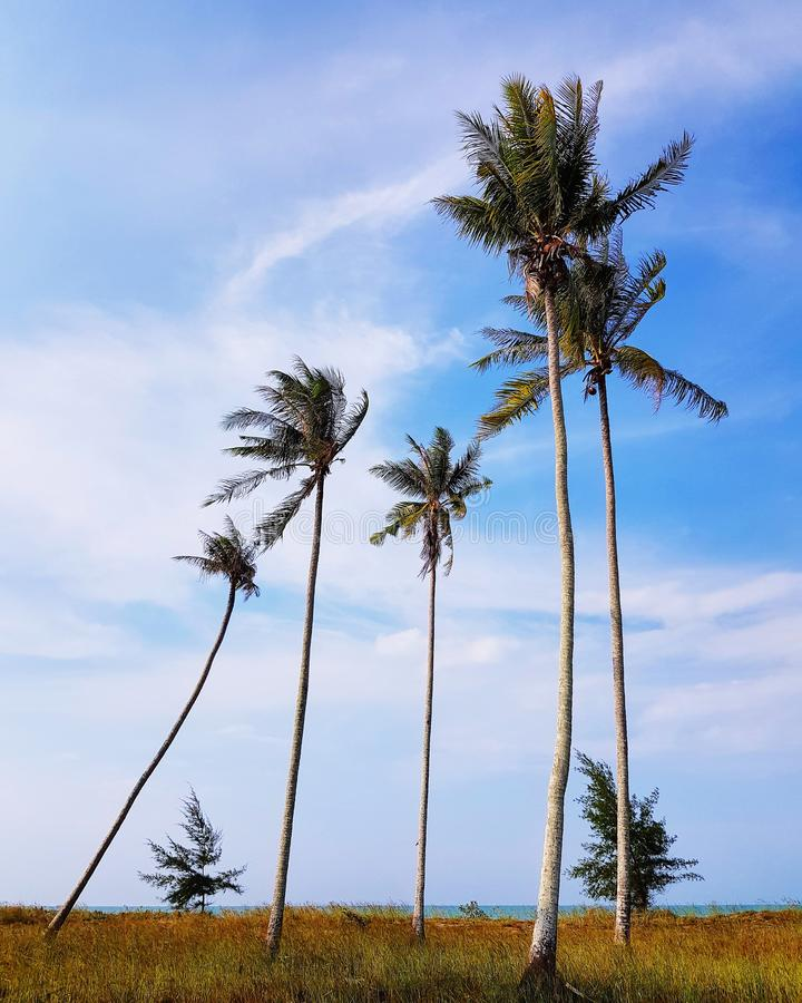 Coconut Palm Tree On Blue Clouds Sky Background  Beautiful
