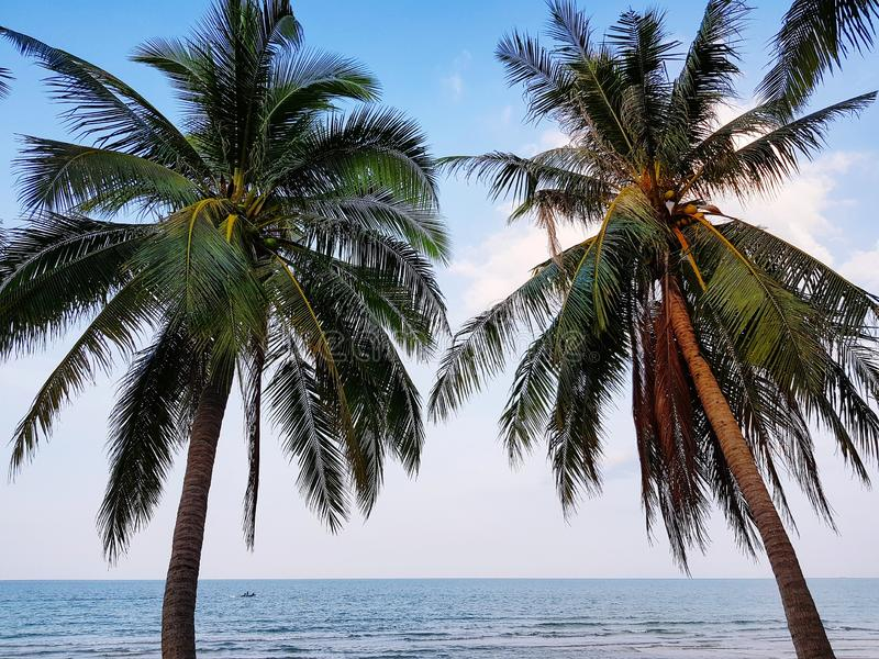 Coconut trees standing at paradise beach stock images
