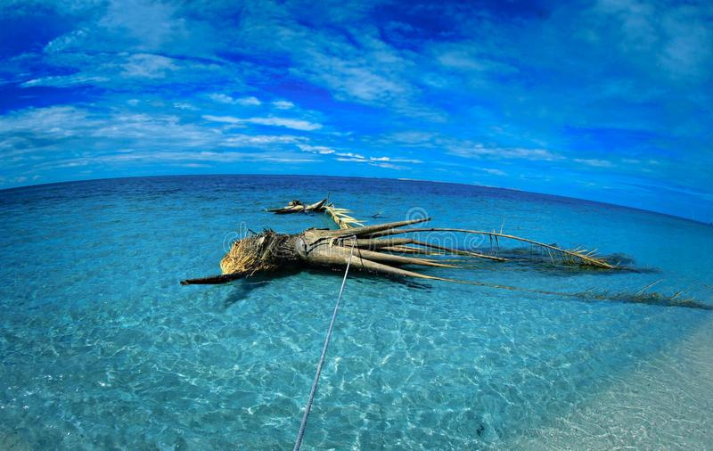 Coconut trees that are stranded in the sea make a good object royalty free stock image