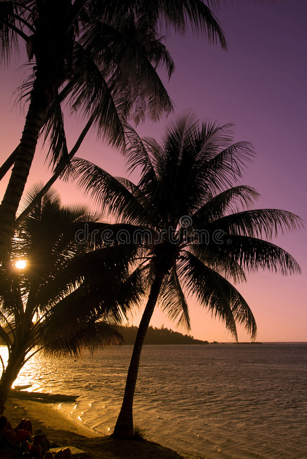 Download Coconut Trees At Sunset Moorea Stock Image - Image of frond, coconut: 3308975