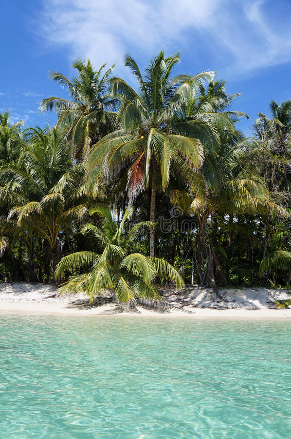 Download Coconut Trees And Turquoise Waters Stock Photo - Image: 27717998