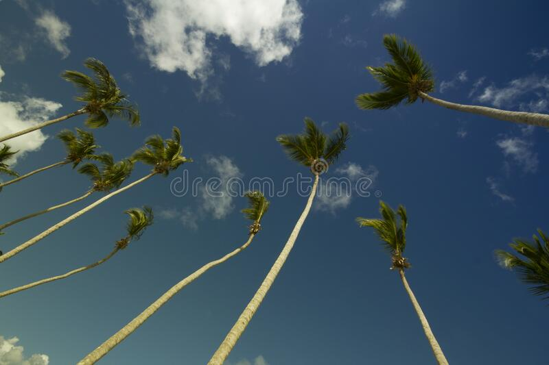 Coconut Trees Under Gray and Blue Cloudy Sky during Daytime royalty free stock photography