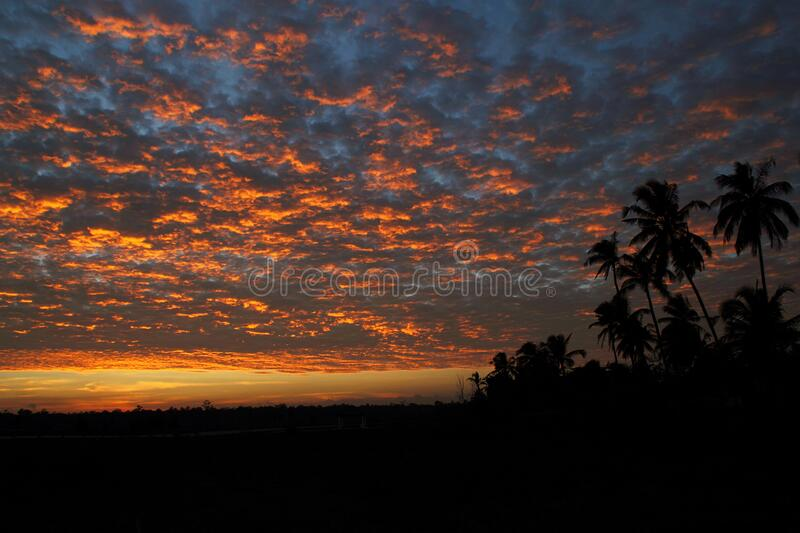 Coconut Trees Under Light and Dark Sky during Sunset royalty free stock image