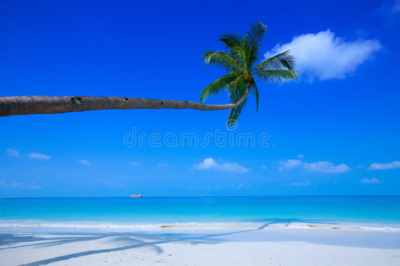 Coconut Treet Swaying At The Shore Stock Images