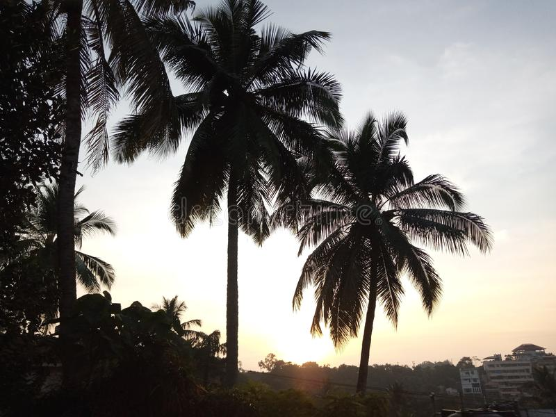 Coconut tress from India evening sunset view. Coconut tress in sunset view from Indian Village  with Brown and red sky stock photography