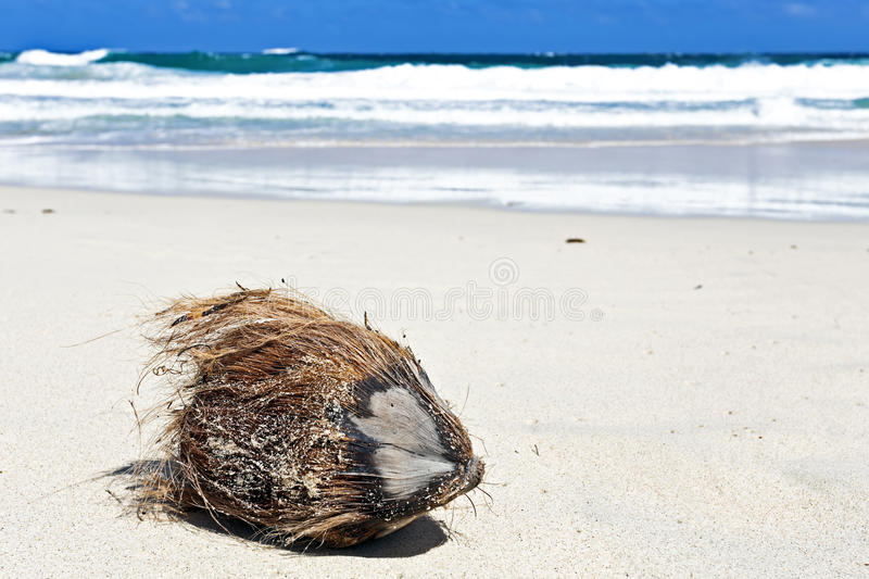 Download Coconut On A Tropical Beach Stock Image - Image: 38127053