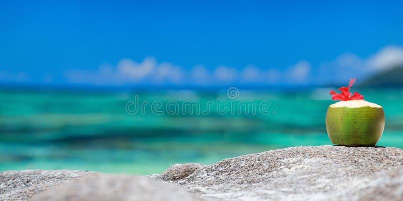 Coconut on tropical coast royalty free stock photos