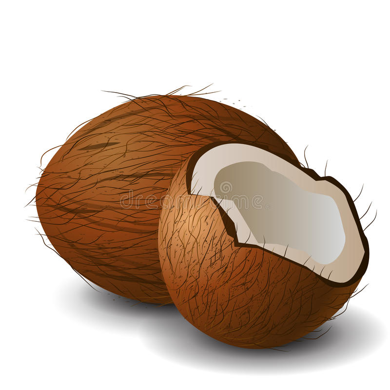 Coconut tropical nut fruit. With cut vector illustration white background stock illustration