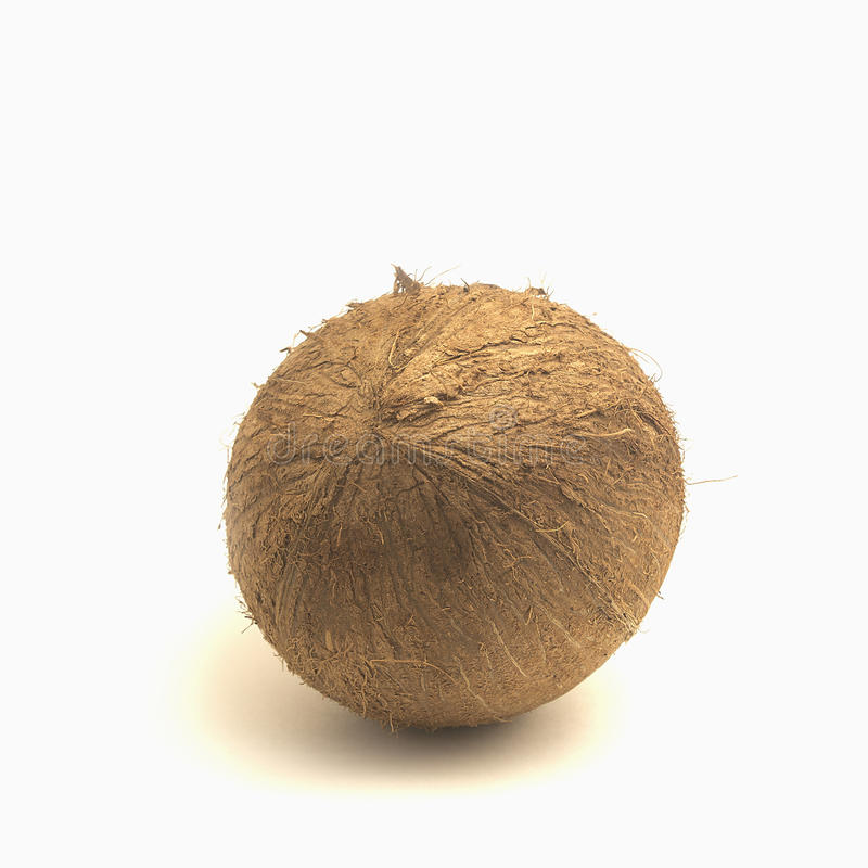 Coconut. royalty free stock image