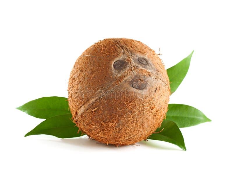 coconut whole 图库摄影