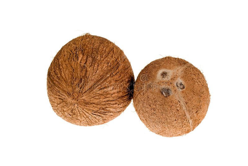Download Coconuts stock photo. Image of white, fresh, many, cocoanut - 14623114