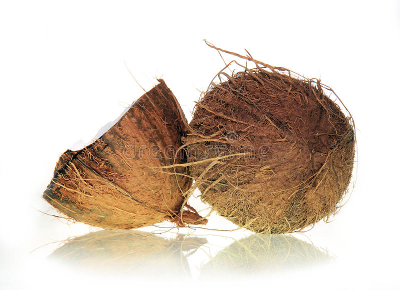Download Coconuts stock image. Image of coconut, fresh, brown - 16368783
