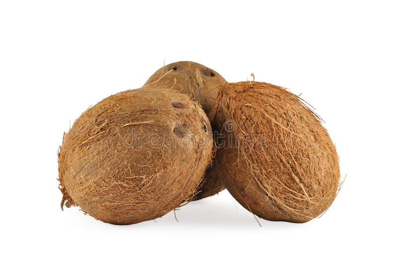 Download Coconuts stock photo. Image of health, diet, tasty, botanic - 17238788