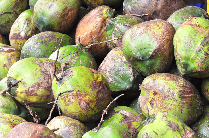 Download Coconuts stock photo. Image of marketplace, shell, fresh - 21084138