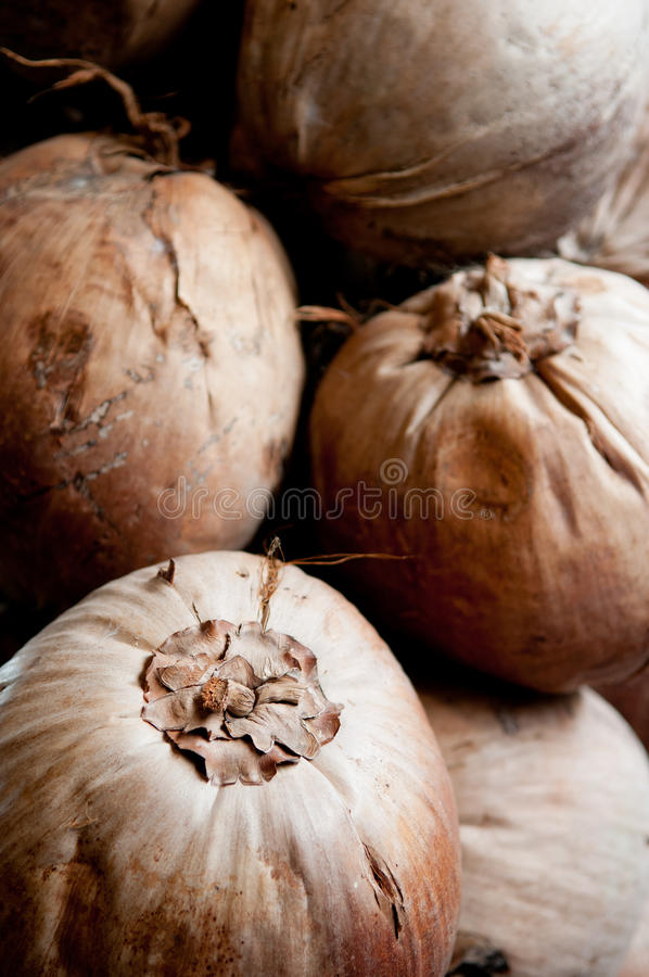 Download Coconuts stock image. Image of drink, feed, food, flora - 24819485