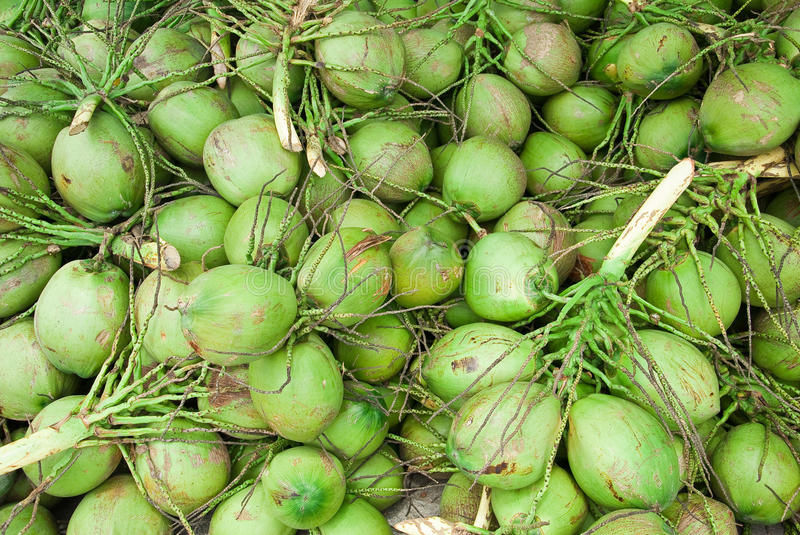 Download Coconuts stock image. Image of green, juice, plant, organic - 25590835