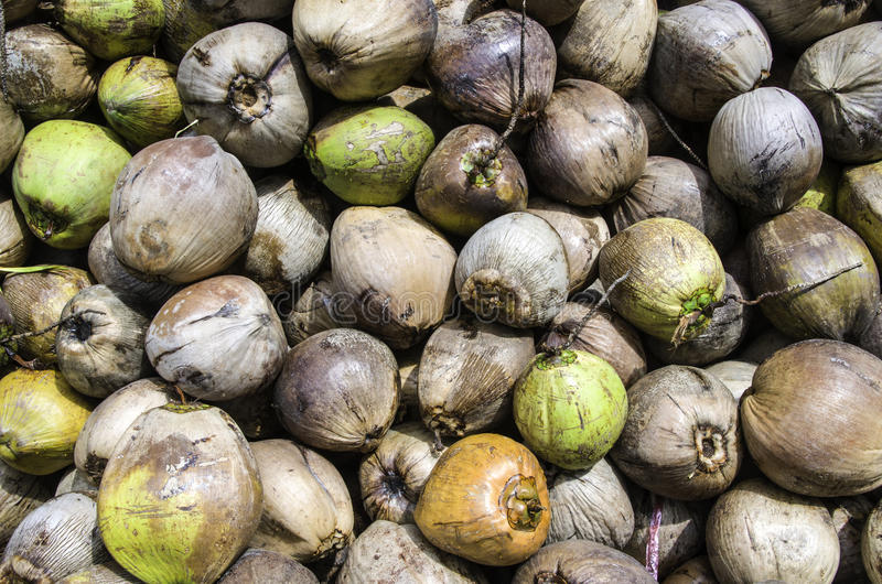 Download Coconuts stock photo. Image of many, plant, fresh, food - 26649752
