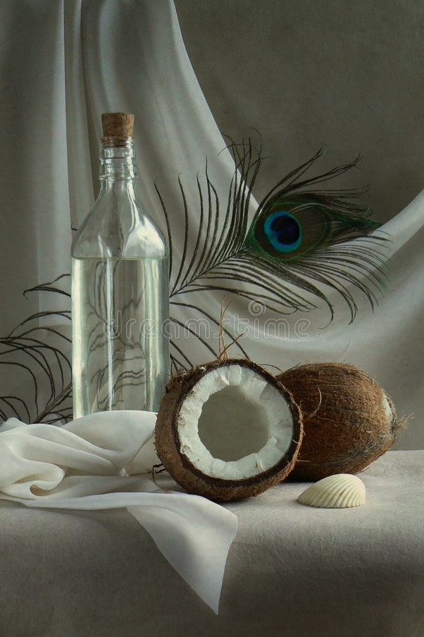 Download Coconuts stock photo. Image of feather, spirit, peel, coco - 5742672