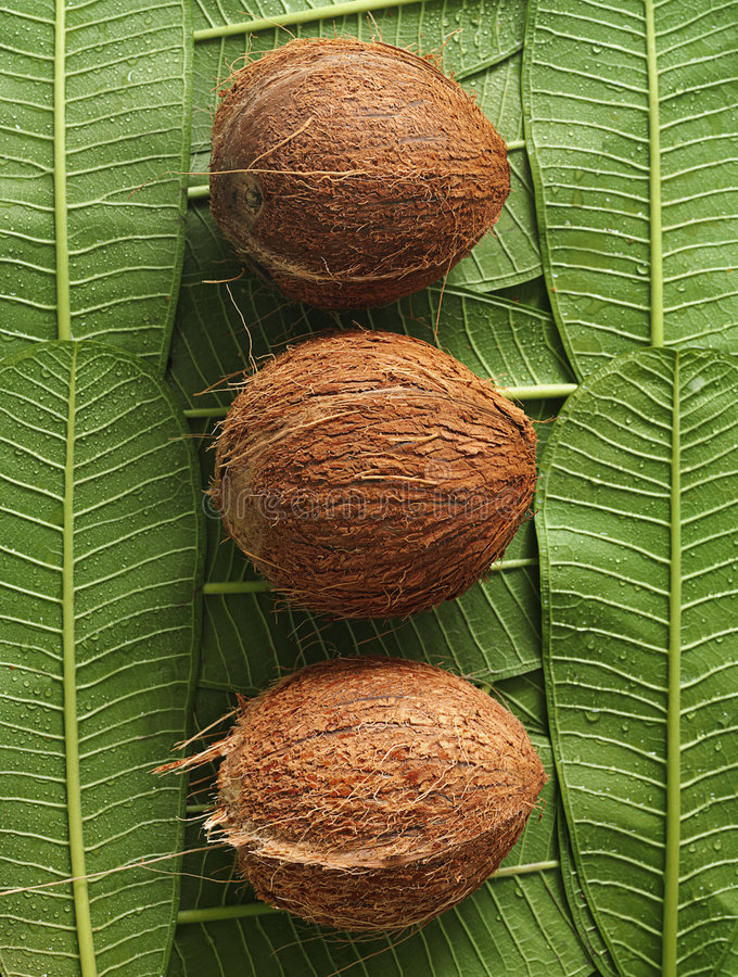 Download Coconuts stock image. Image of coconuts, exotic, drops - 8235433