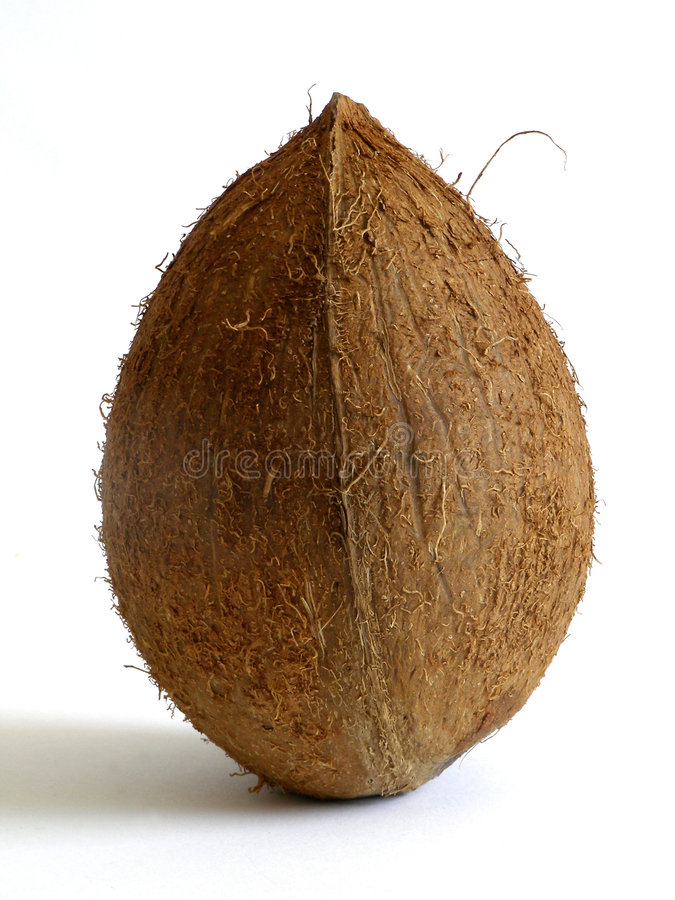 Download Coconuts stock photo. Image of exotic, broken, coco, round - 993308