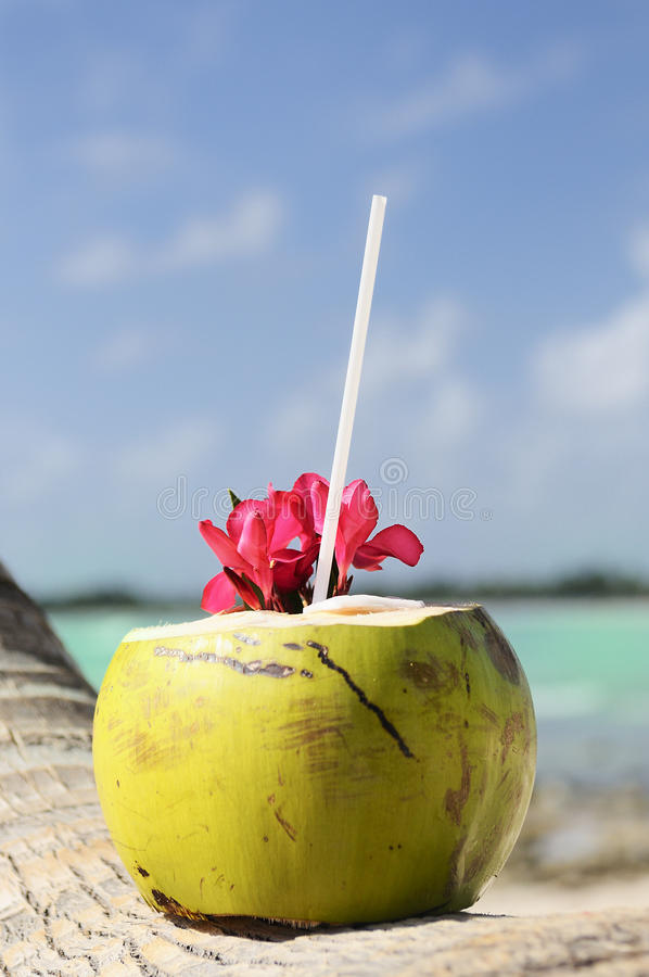 Download Coconuts on the beach stock photo. Image of scenic, nature - 22610928