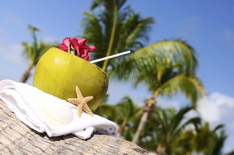 Download Coconuts on the beach stock photo. Image of outdoor, palm - 22736966
