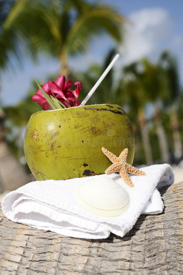 Download Coconuts on the beach stock photo. Image of drink, marine - 22884468
