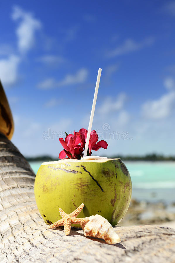Download Coconuts On The Beach Stock Images - Image: 25513684