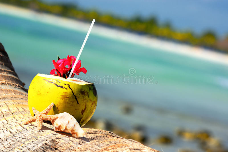 Download Coconuts on the beach stock photo. Image of caribbean - 26489748