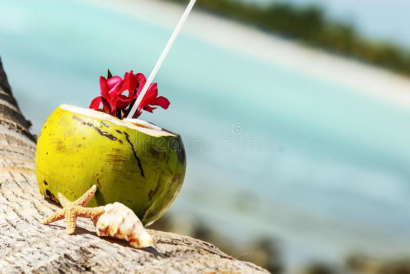 Download Coconuts on the beach stock photo. Image of island, closeup - 31136228