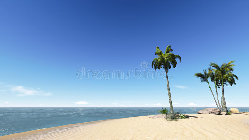 Download Coconuts on the beach. stock photo. Image of resort, coconut - 34961334
