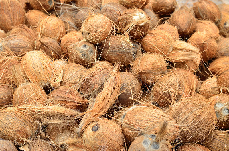 Coconuts, cleaned from external skin stock photography