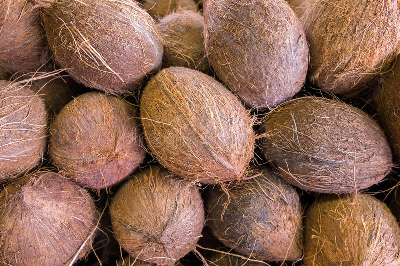 Download Coconuts stock image. Image of coconuts, oval, natural - 31898733