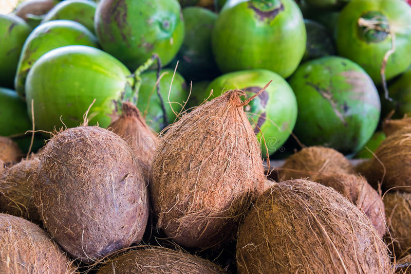 Download Coconuts stock photo. Image of green, coconuts, ripe - 31898732