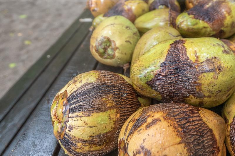 Coconuts fresh from the tree royalty free stock photography