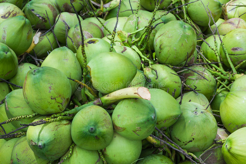 Download Coconuts Fruit Stock Image - Image: 27328411