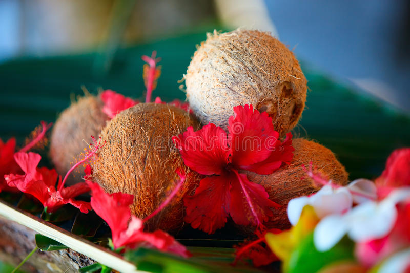 Download Coconuts And Hibiscus Flowers Stock Photo - Image: 17935584