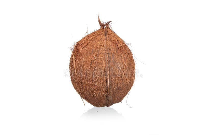 Coconuts isolated royalty free stock image