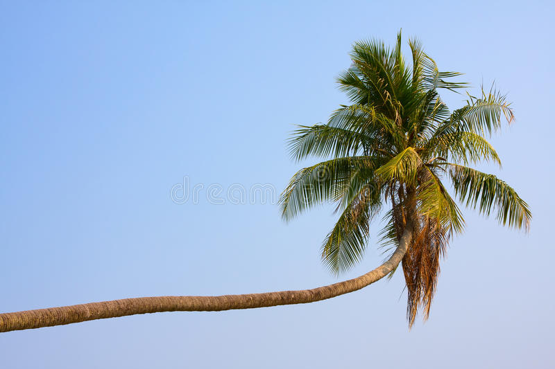 Download Coconuts palm tree stock photo. Image of fruit, green - 42697652