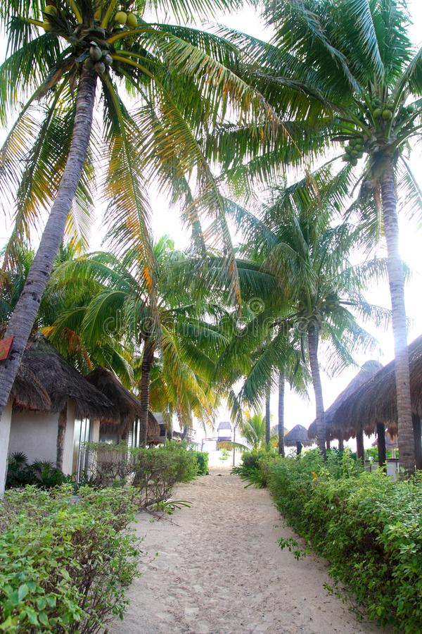 Download Coconuts Palm Trees In North Beach Isla Mujeres Stock Image - Image: 19293055