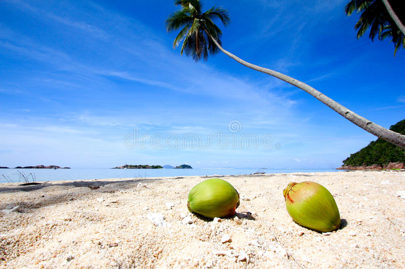 Coconuts At Paradise Beach Stock Photography